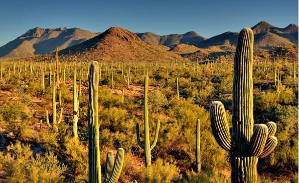 Saguaro National Park in Tucson, Arizona